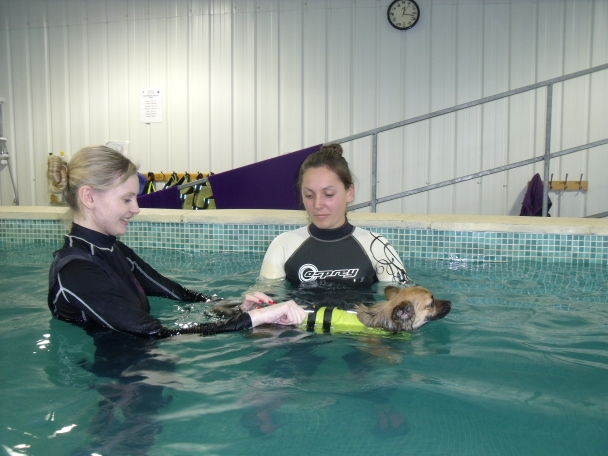 Level 3 Certificate in Hydrotherapy for Small Animals