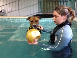 Roxy in the water wanting her ball thrown for her
